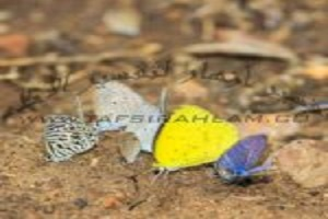 Photo of dream butterfly